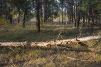 Жители должны заключить договор купли-продажи лесных насаждений для собственных нужд.