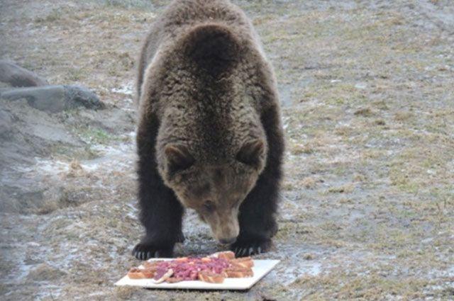 В Тазовском районе застрелили медведя-людоеда
