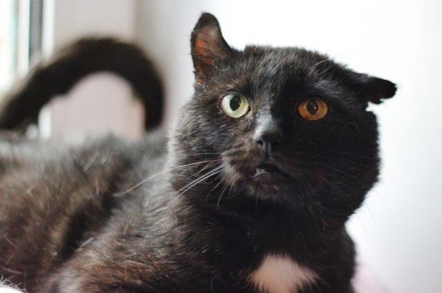 Ласковый и добродушный кот Брайн ждёт нового хозяина в приюте.