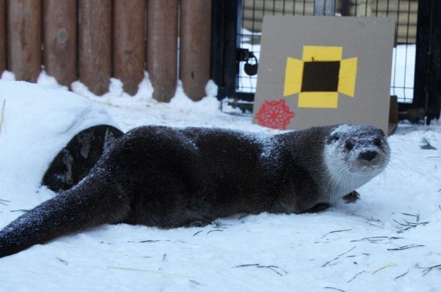 ВЧелябинском зоопарке выбрали ассистента Деда Мороза