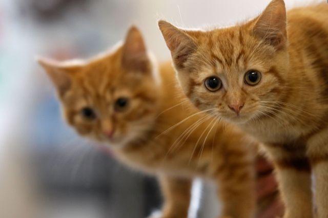В Киеве ищут волонтеров, которые будут гладить котов
