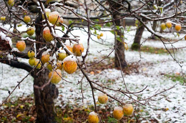 Налог на фруктовые деревья в украине история появления денег для детей