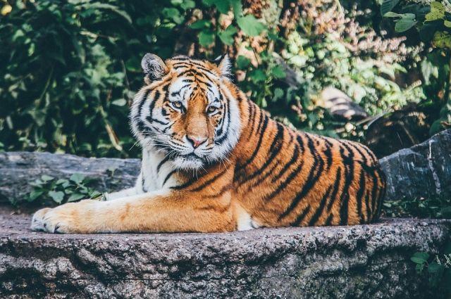 В Приморье установили личности посетителей, напавших на животных в зоопарке