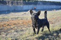 Первое чтение закона об ответственном обращении с животными состоялось ещё в 2011 году.