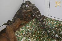 В поезде «Калининград-Москва» нашли двух живых варанов.