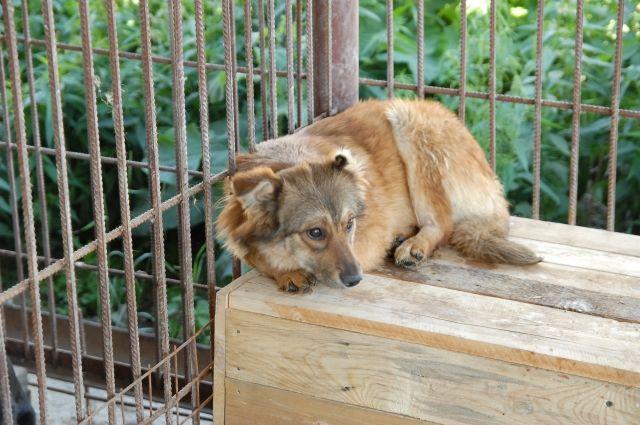В Новокузнецке судебные приставы арестовали будки для собак.