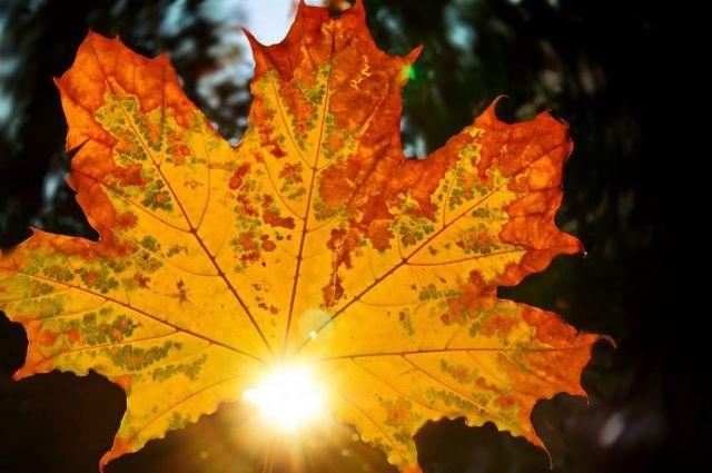 Осень в Ростове-на-Дону.