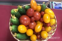 Полученные результаты говорят о том, что ситуация с овощной продукцией не совсем благополучная.