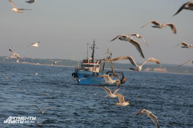 РФ и Литва договорились о квотах на вылов рыбы в Куршском заливе.