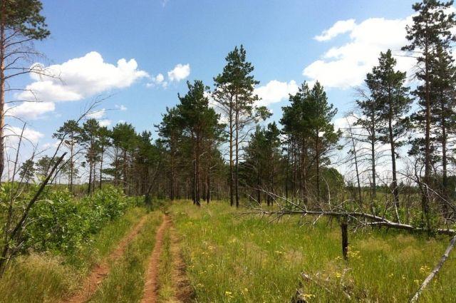 Площадь «зелёного щита» вокруг Рязани может составить приблизительно 68 тыс. гектаров