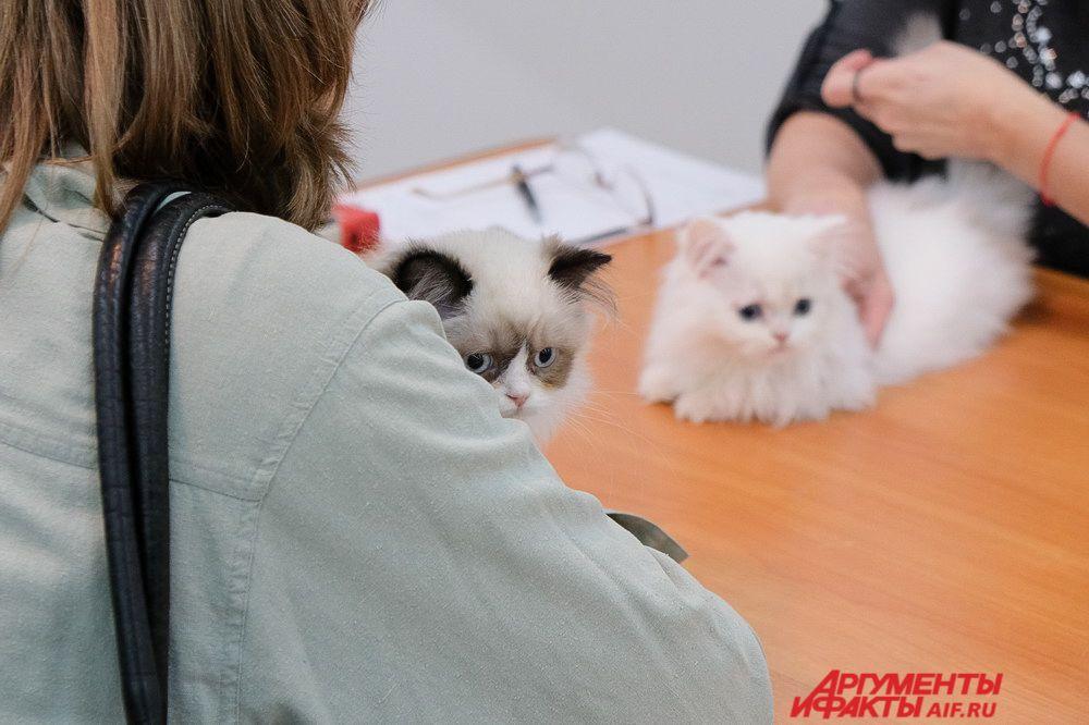 Профессиональные заводчики ответят на любые вопросы о содержании животных.
