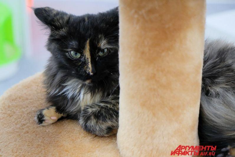 На выставке представлены порядка 30 как популярных, так и редких пород кошек.