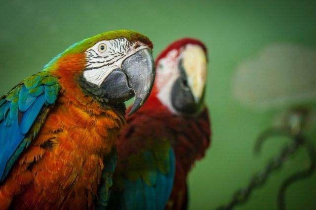 Ужительницы Щекино украли клетку сптицами— Возвращение блудных попугаев