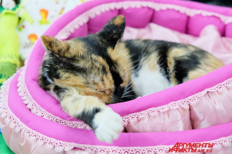 Некоторые кошки уютно спали в любимых лежанках.