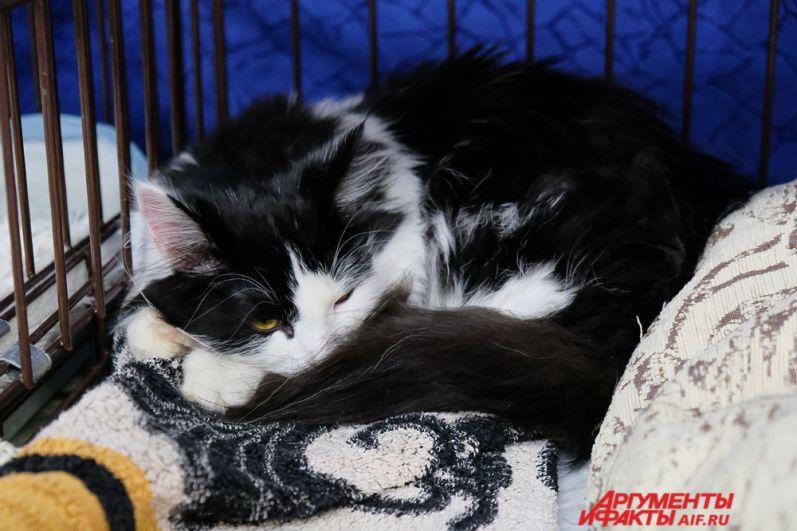 Также на выставке кошек можно купить сувениры, связанные с кошками.