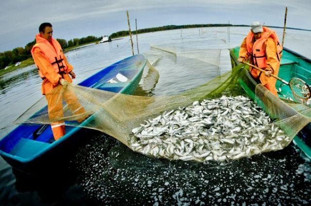Керченский рыбак нелегально поймал креветку ибычков на25 тыс. руб.
