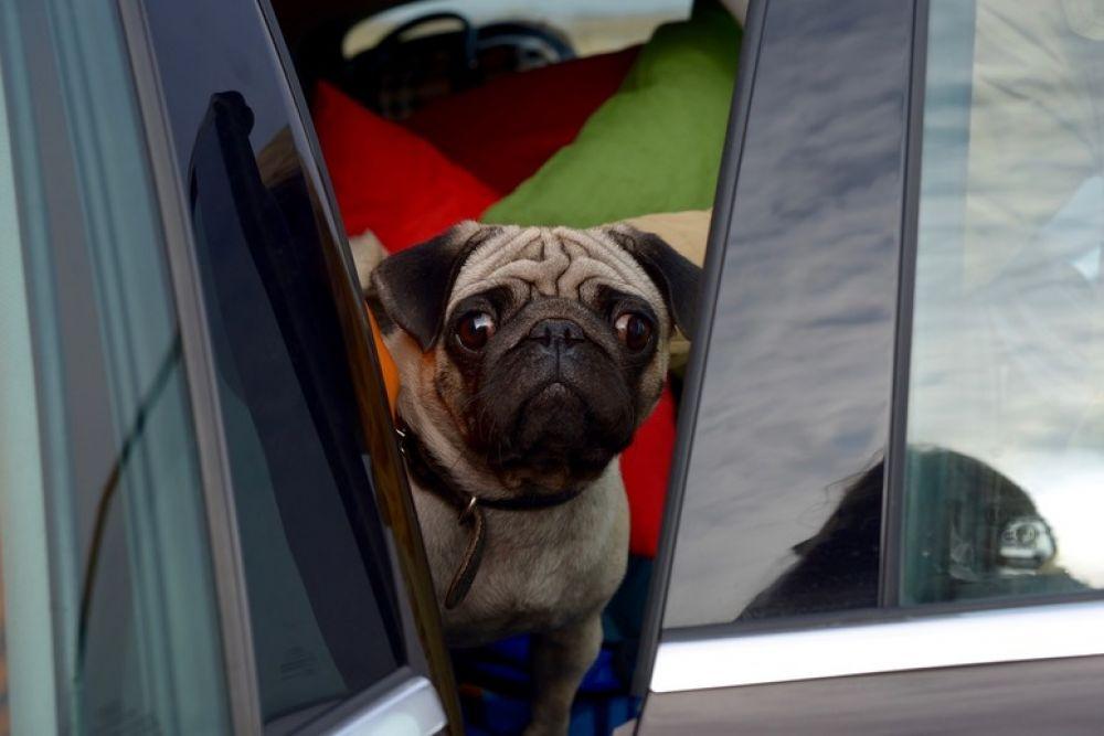 В сериале сыграли не только люди, но и животные, в том числе - ростовский мопс Фредди, переименованный на несколько съемочных дней в Рудика.