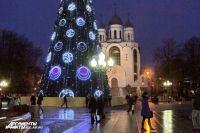 В Калининграде начали устанавливать главную городскую ель.