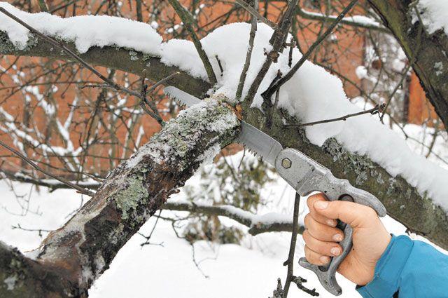 Сезон обрезки деревьев начался встолице края