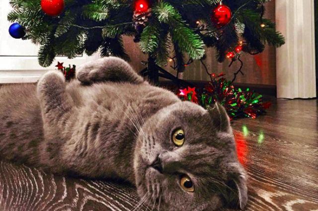 В Украине начинается продажа новогодних елок: названы цены