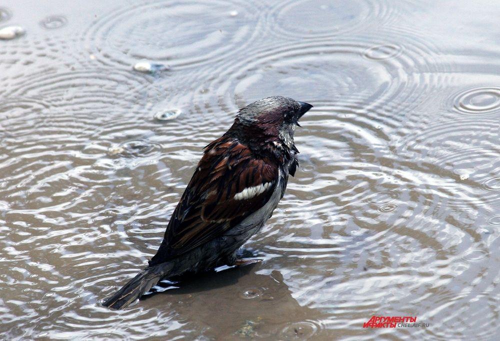 Промок до пёрышка
