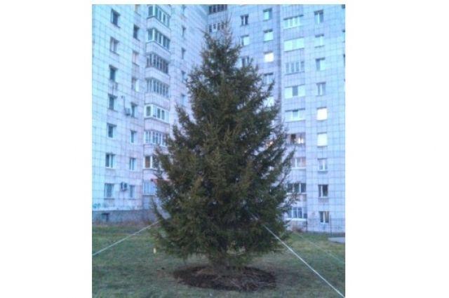 К новому году елку украсят игрушками.