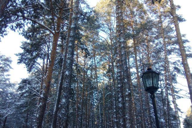 В лесопарке «Затюменский» идет установка фонарей