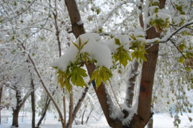 Тюменцы могут не рассчитывать на снегопады в ближайшее время