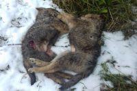 В Тюмени живодеры выбросили щенят в мешке в ледяную воду, двое погибли