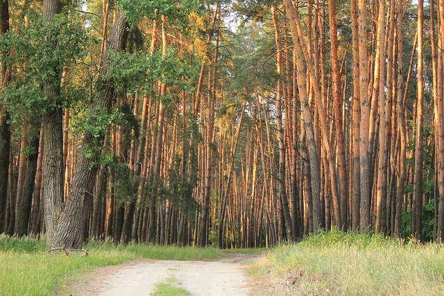 ВУльяновской области нелегально продали землю под размещение турбазы