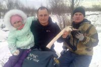 Тоболяки спасли лебедя из полыньи