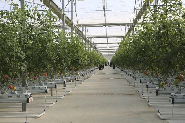 Аграрии Дагестана в2017г планируют увеличить сбор тепличных овощей практически на27%
