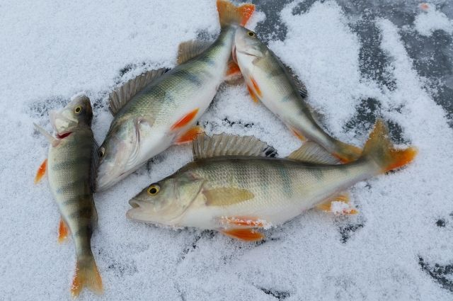 рыбалка на скале в новосибирске