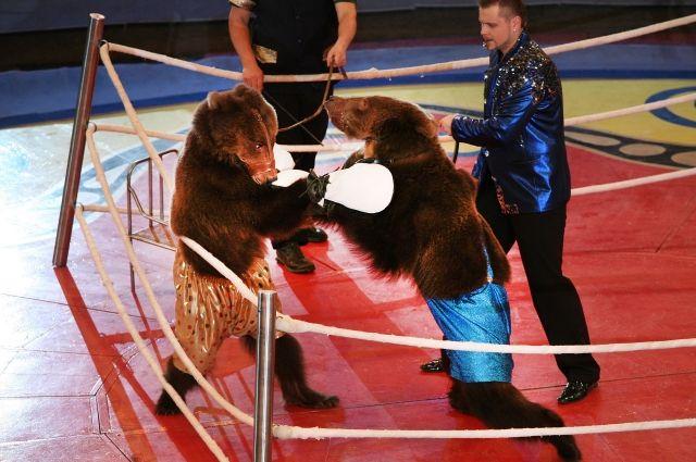 На арене Пермского цирка – всемирно известный аттракцион знаменитой династии Филатовых.