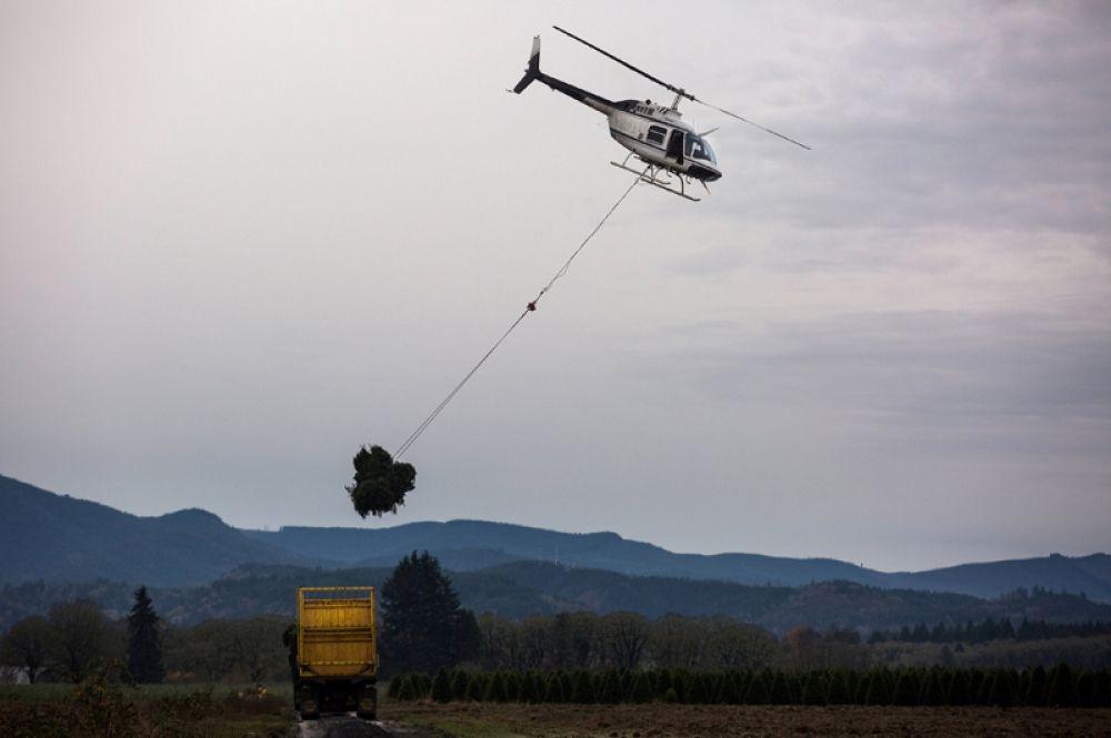 25 ноября. Вертолет перевозит свежесобранные елки в пункты назначения по всей территории США, Шеридан, штат Орегон.