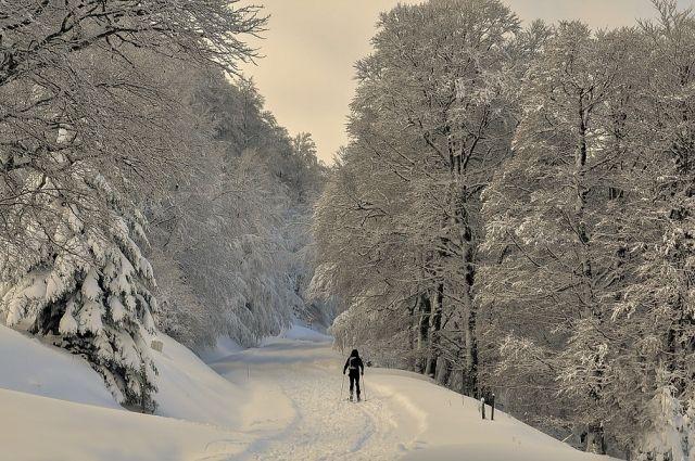 Что может быть лучше зимой, чем лыжная прогулка по заснеженному лесу.