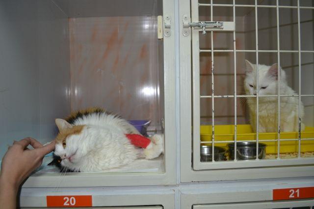 Чтобы не метаться в поисках хорошего ветеринара в экстренной ситуации, лучше выбрать клинику как только решили завести питомца.