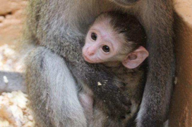 В зоопарке всегда с любовью относятся к малышам.