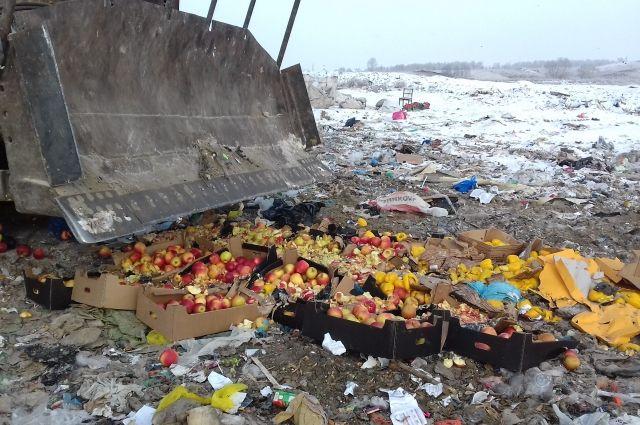 Партию яблок увели на полигон и уничтожили бульдозером.