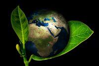 Раздельный сбор мусора сделает город более экологичным