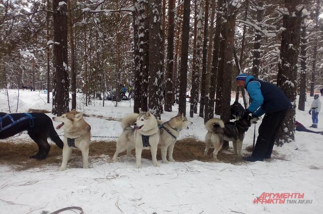 Посмотреть на соревнования и сфотографироваться с собаками могут все желающие