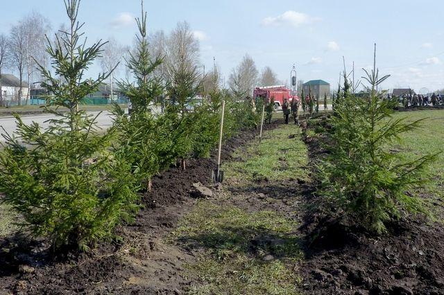 ВВоронеже экоактивисты будут охранять елки отнезаконной вырубки