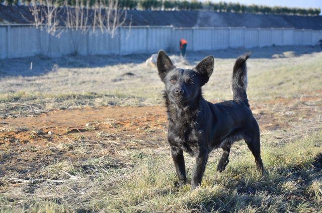 Зоозащитники просят челябинцев взять напередержку животных изГорЭкоЦентра