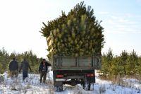 В Тюмени на продовольственной ярмарке будут продавать новогодние ели
