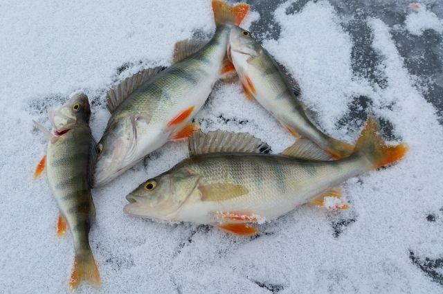 Рыбу пытались провезти через границу.