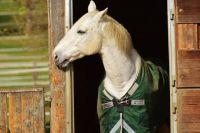 Тюменец украл у своей знакомой коня и продал его