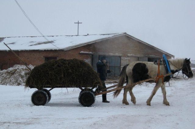 В Тюменской области судят родственников-конокрадов из Курганской области