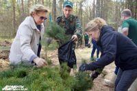 Парк «Дубки» в Ленинском районе Нижнего Новгорода благоустроят в 2018 году.