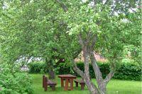 Традиционная яблоня