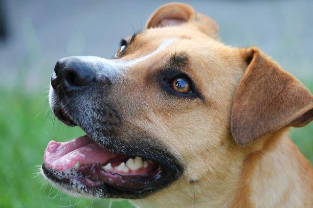 В Тюмени появилась новая площадка для собак